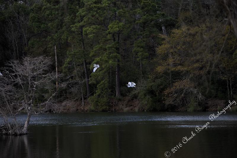 Lake2016-1 (3).jpg
