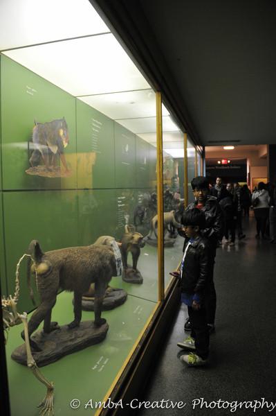 2013-12-30_AMNHMuseum@NewYorkNY_48.jpg