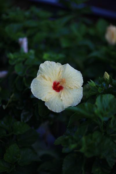 Kauai_D2_AM 120.jpg