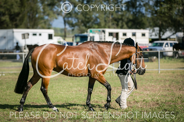 201 Led Mare 4yrs & over N/e 15hh