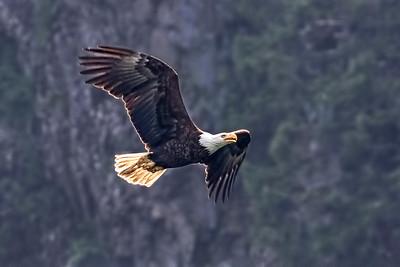 Kenai Fjords Wildlife Cruise