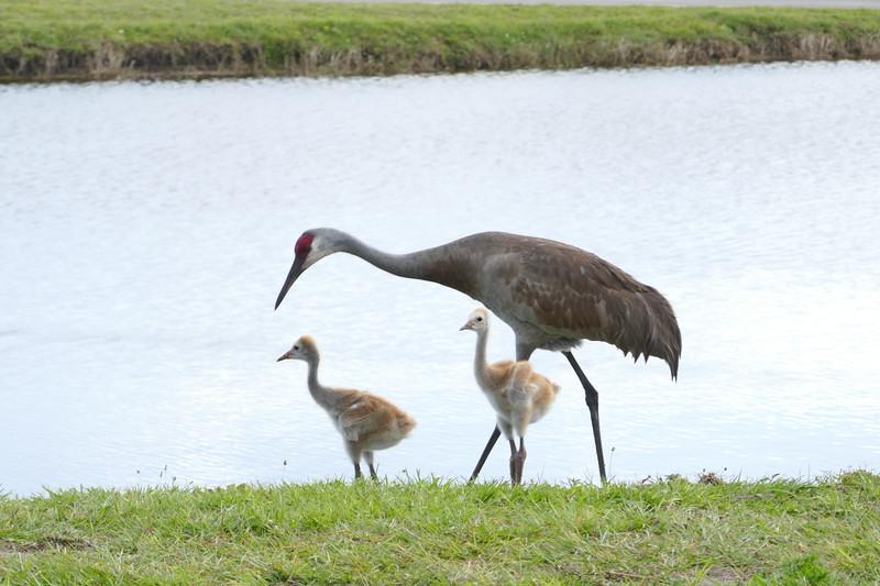 lake_ashton_birds_190330.jpg