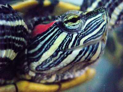 Mike & Edwin's turtle