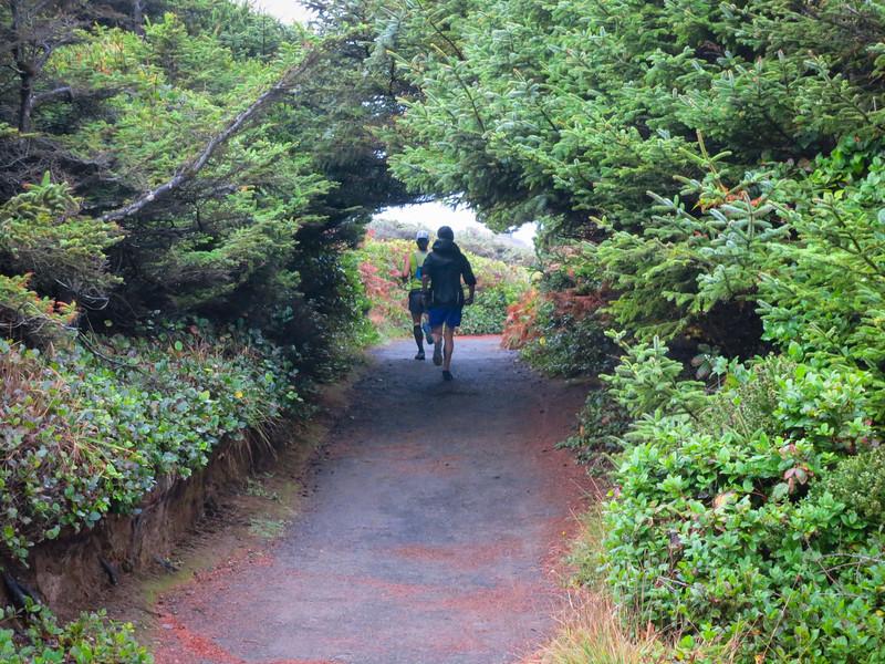 Tree tunnels.