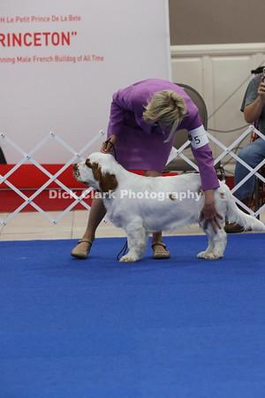 Puppy Dogs 6-9 Months