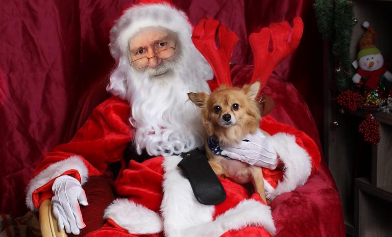 Santa-dog1.jpg