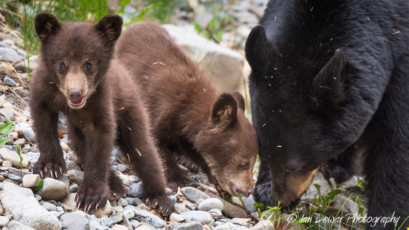 Mama and the Cubs