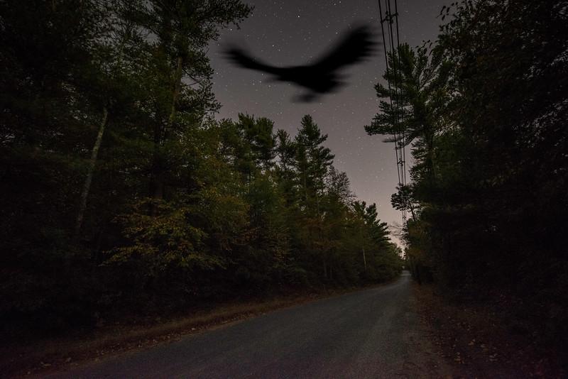 Thunderbird at night.jpg