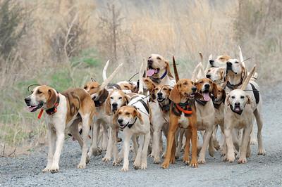 Bull Run Hounds