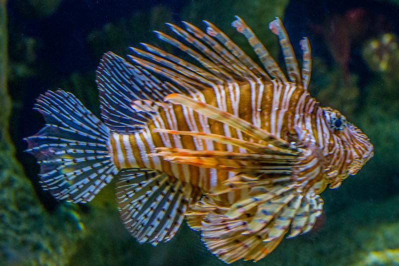 GA Aquarium with Linc, Ali & Abe-23.jpg