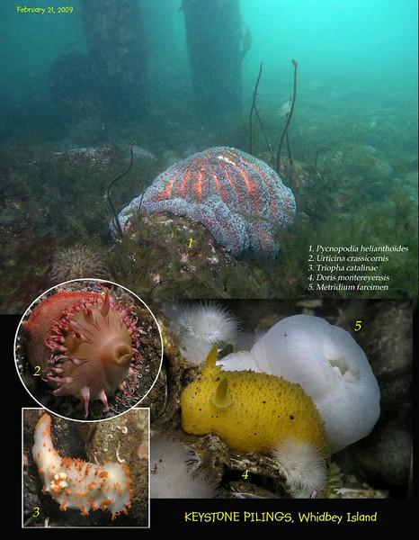 Underwater scene, Keystone Pilings, February 21, 2009