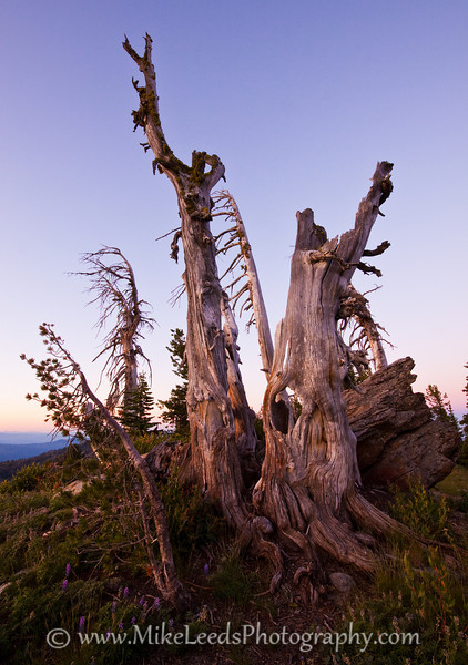 Near the summit of Snowbank Mountain in Idaho on an August morning.