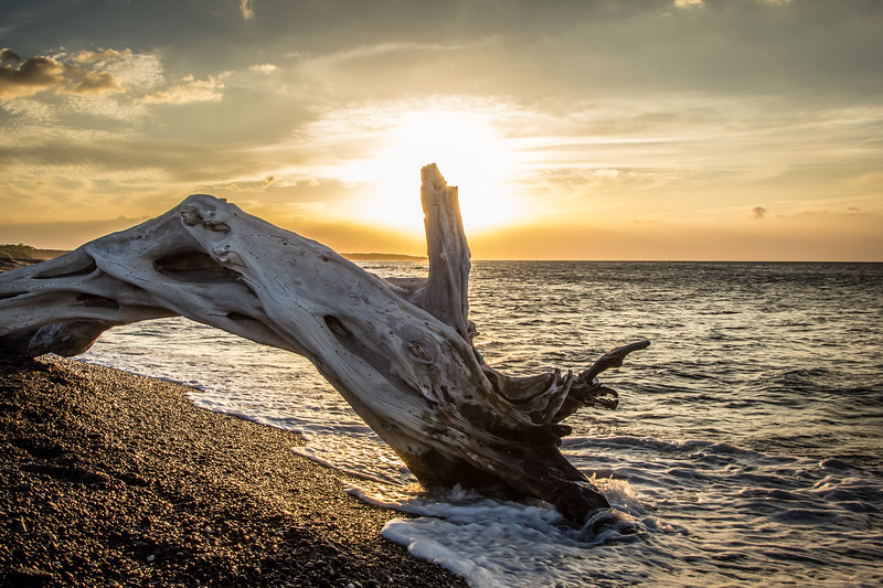 Driftwood at Kiholo Bay