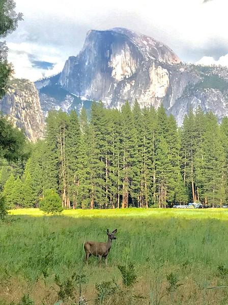 pbm7-2019-Yosemite-13.jpg