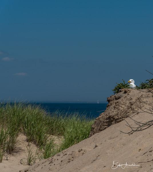 Block Island-32.jpg