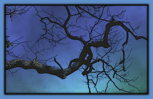 Nature - Three Fantasy