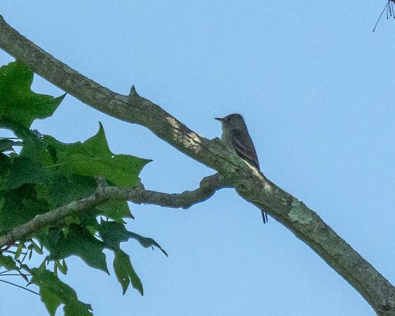 West Laurel Hill Birds