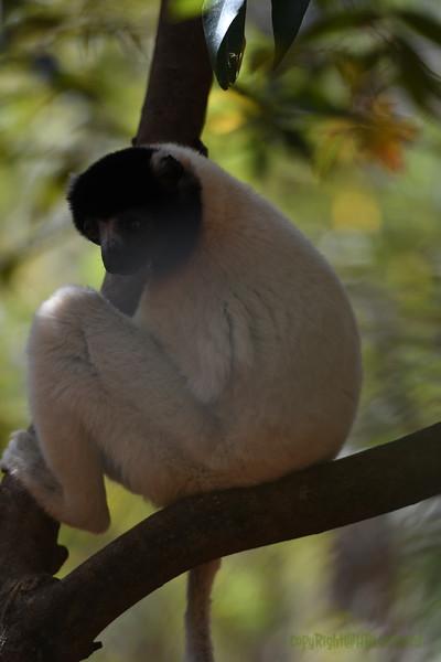 Madagascar 2017 (14)