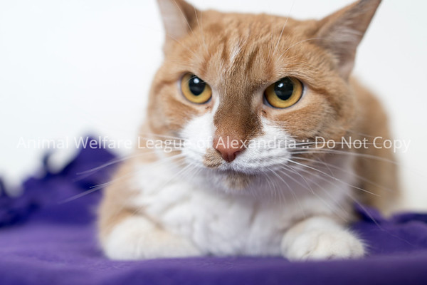 2018 March Cat Gallery
