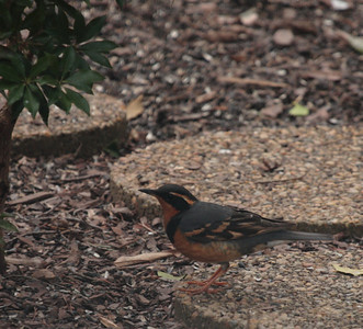 Northern Virginia Birding 2-28-10