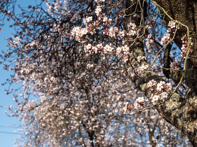 Navruz