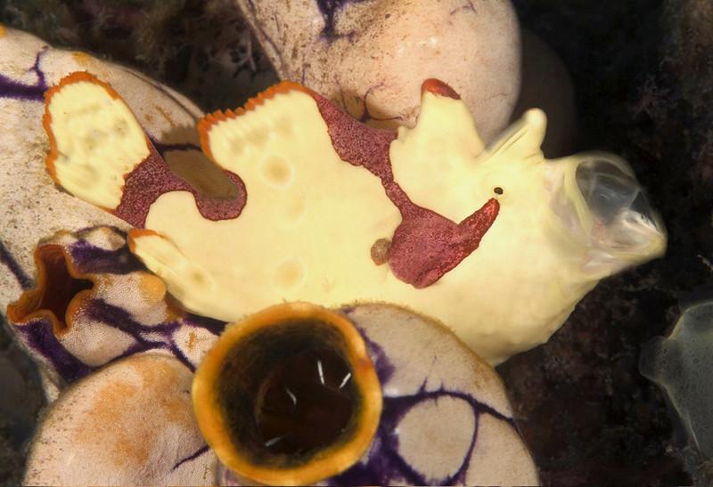 fish frog baby (2).jpg