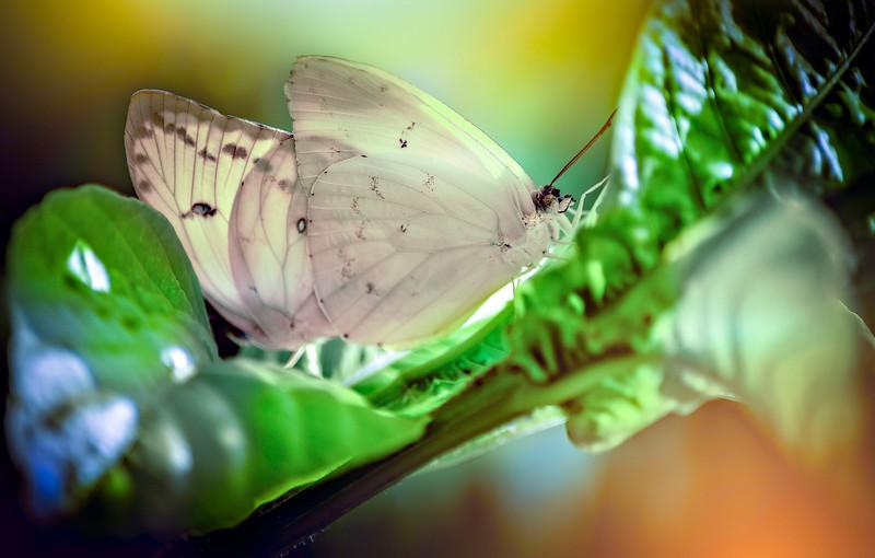 Butterfly-144.jpg