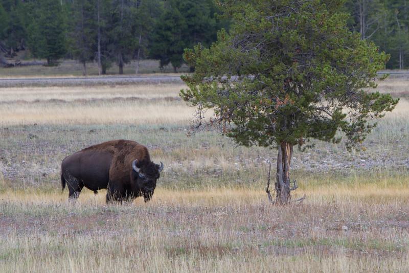 02_Yellowstone National Park_Montana_Wyoming-10.jpg