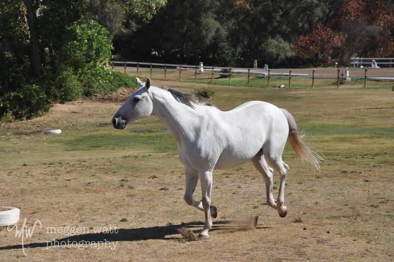 EB&Horses-087.jpg