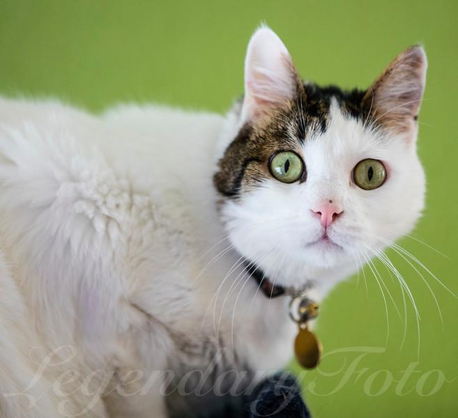 Cats_Lamborghini_1.jpg