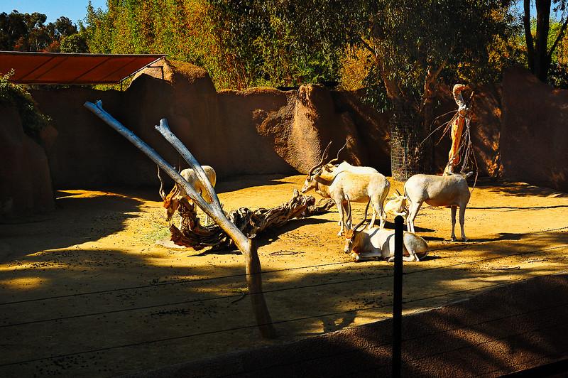 San Diego Zoo-16