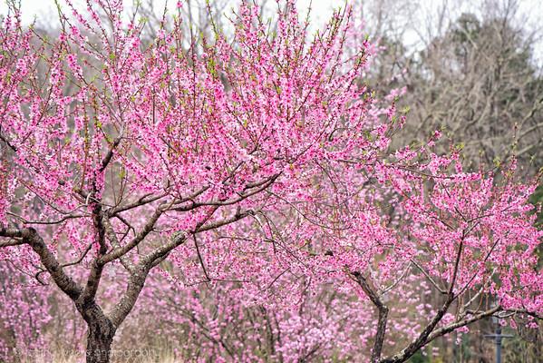 Athens Botanical Gardens of Georgia 2021