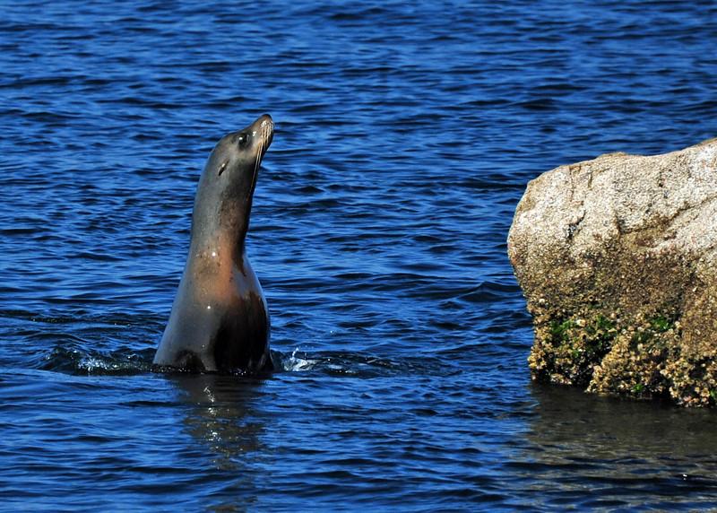 Seal   Mexico