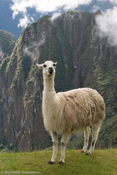 06.20_Machu Picchu-7701.jpg