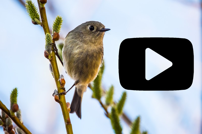 BIRDS ARE AWESOME  YouTube Video