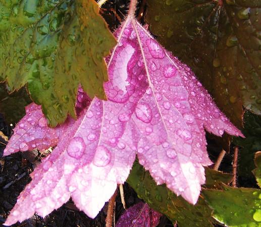 leaves I've met