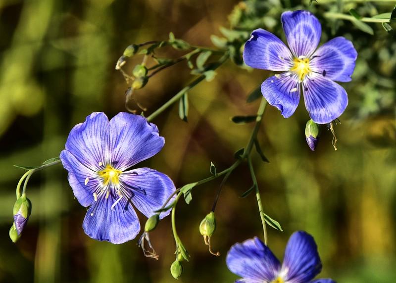 NEA_0084-7x5-Flowers.jpg