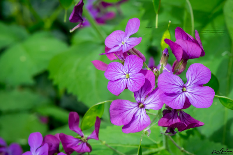 Oregon Flora