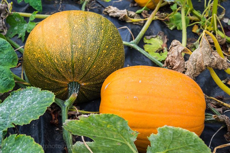 Hob Green autumn-26.jpg