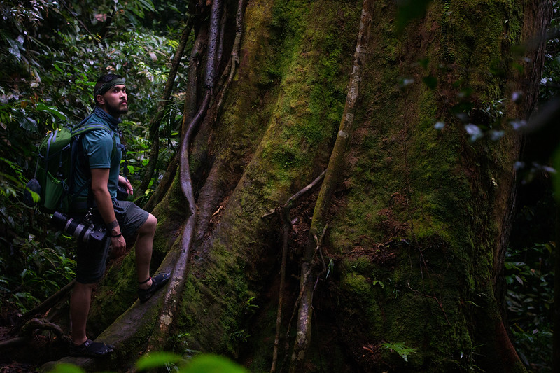 Mike Talladen, a conservation photographer from Chicago, observes a giant tree high in Gunung Leuser National Park.