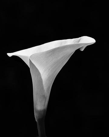 Black & White - Dave Muller