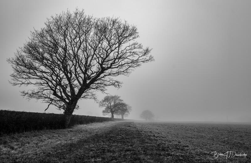 Foggy Hassocks-6915-Edit-Edit.jpg