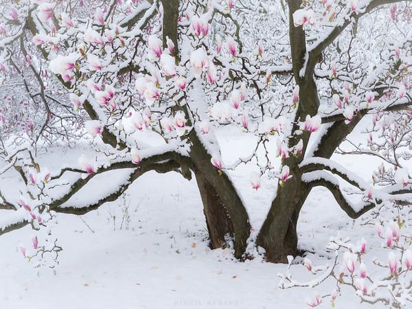 When seasons collide...
