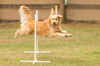 A Way To Play Agility - March '19