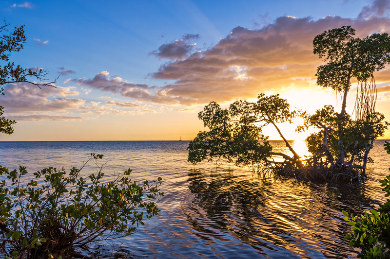 Mangrove golden hour