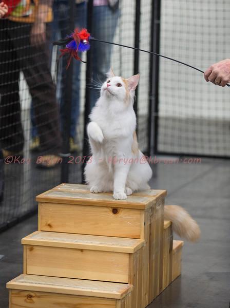 CatShow2014168.jpg