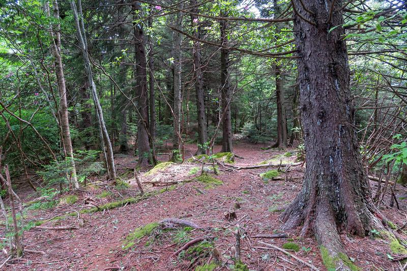 Green Mountain Trail -- 5,850'