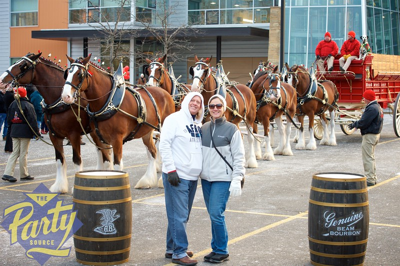 Clydesdale Portraits 116.jpg