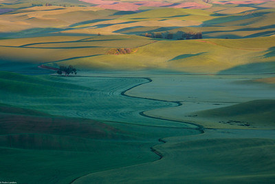 Palouse for the Last Time