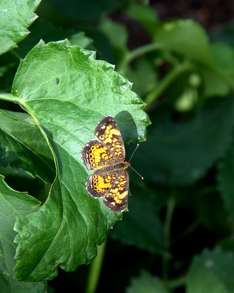 Butterfly small.jpg